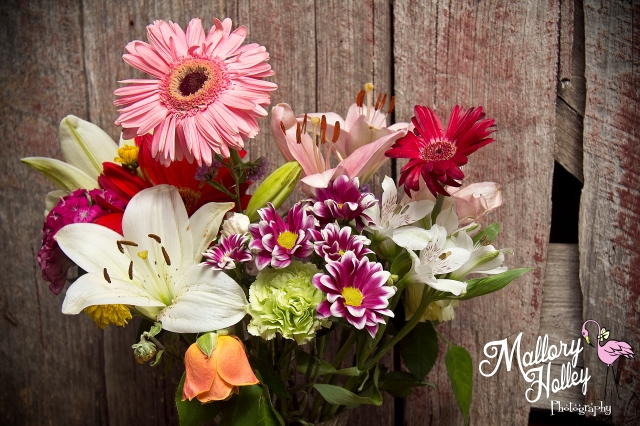 Birthday flowers from Denise captured by Mallory Holley Photography