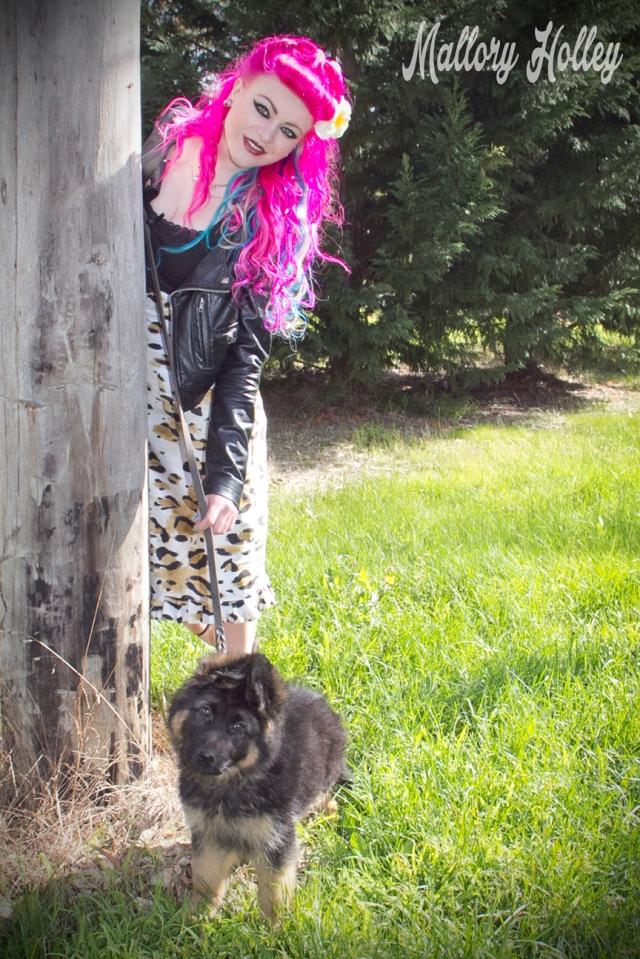 Dress Me Gorgeous Pinup Dress Review German Shepherd Puppy_0214.