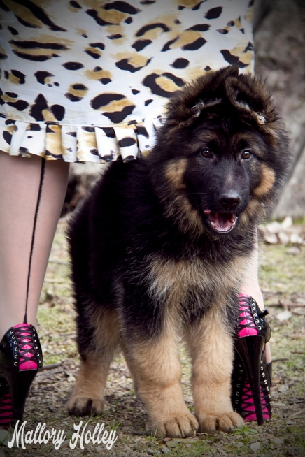 Dress Me Gorgeous Pinup Dress Review German Shepherd Puppy_0303.