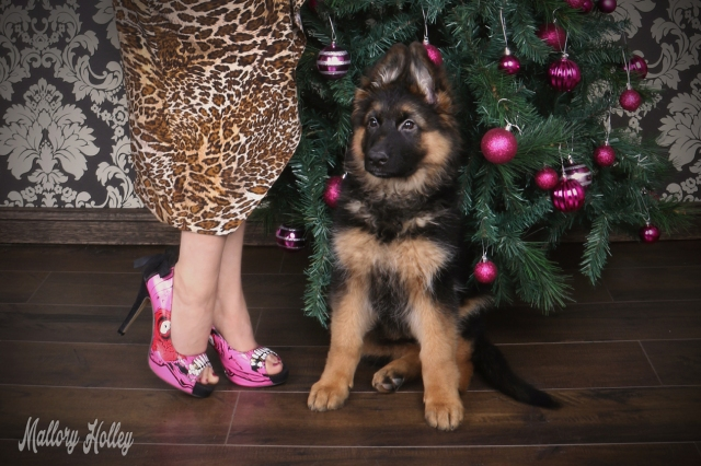 christmas-pinup-and-puppy-photoshoot-iron-fist-high-heels